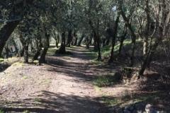 Il sentiero tra gli ulivi per raggiungere il Castello di Arco