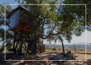 Bellavista Tuscany Treehouse case sull'albero Italia