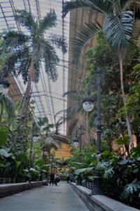 la Stazione di Atocha, il giardino tropicale