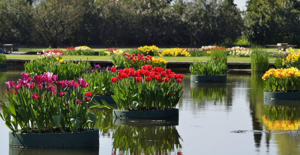 I laghetti fioriti del Parcò Sigurtà di Valeggio sul Mincio
