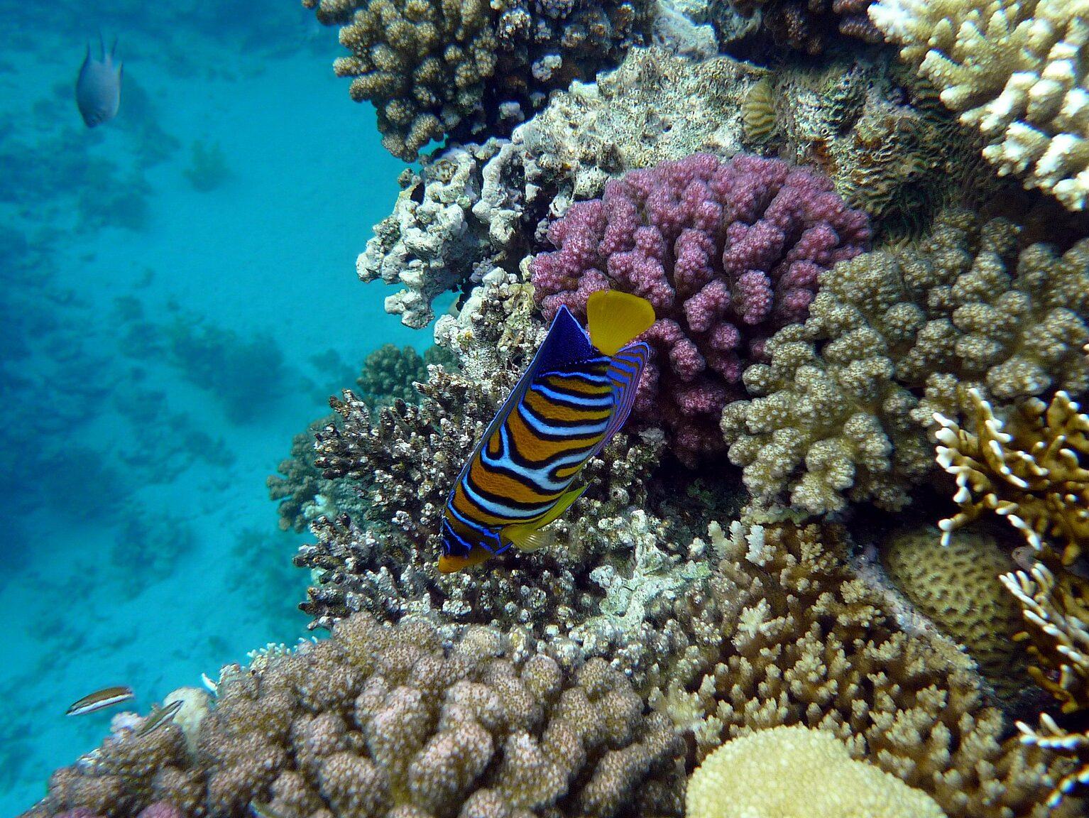 Cosa vedere a Sharm El Sheikh: La barriera corallina