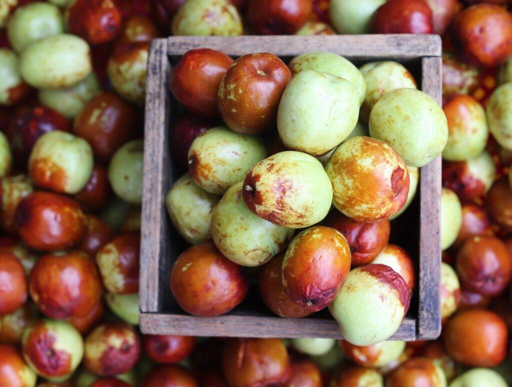 Giuggiole, frutto tipico del paesed i Arquà Petrarca sui colli Euganei in Veneto
